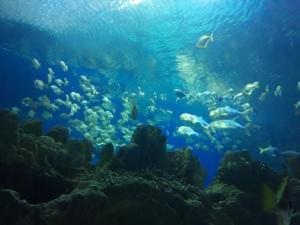KLCC Aquarium
